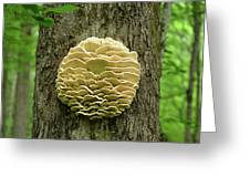 Northern Tooth Fungus Greeting Card