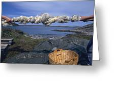 Norway Sheep Wool Getting Rolled Greeting Card