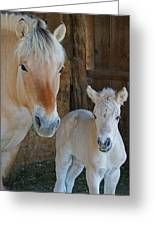 Norwegian Fjord Horse And Colt 1 Greeting Card