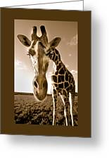 Nosey Giraffe Greeting Card