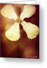 Nostalgic Wildflowers Greeting Card