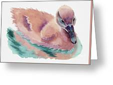 Not An Ugly Duckling Greeting Card