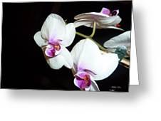 Loving Glance Greeting Card