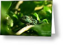 Not Quite Hidden Iguana Greeting Card