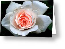 Not So Perfect White Rose Greeting Card