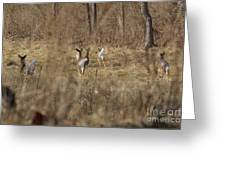 Nothing But White Tails Greeting Card
