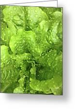 Nourish In Green Greeting Card