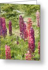 Nova Scotia Lupine Flowers Greeting Card