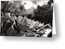 Novato Greeting Card