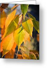 November Colors Greeting Card