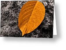 November Leaf Greeting Card