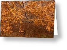 November Oak Greeting Card