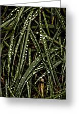 November Raindrops On Grass #1 Greeting Card