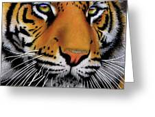 November Tiger Greeting Card by Jurek Zamoyski