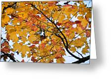 November Twilight Greeting Card