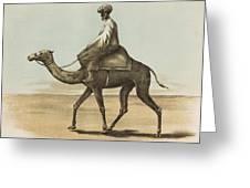Noyes, Edward , Riding Camel Greeting Card