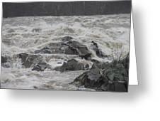 Potomac Torrent Greeting Card