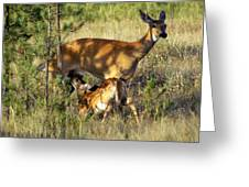Nursing Fawn Greeting Card