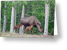 Nursing Moose Greeting Card