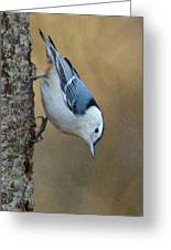 Nuthatch In Profile Greeting Card