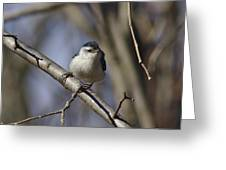 Nuthatch On Perch Greeting Card