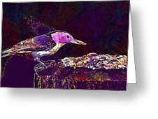 Nuthatch White Breasted Nuthatch  Greeting Card