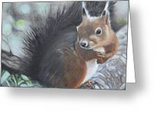 Nutkin Greeting Card