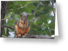 Nuts Greeting Card
