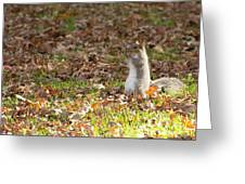 Nuts For Fall Greeting Card