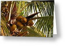 Nuts On Tree  Greeting Card