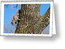 Nutsnutsnuts Greeting Card