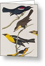 Nuttall's Starling Yellow-headed Troopial Bullock's Oriole Greeting Card