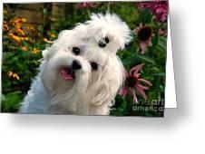 Nuttin' But Love Greeting Card