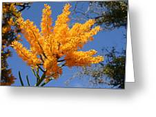 Nuytsia Floribunda Greeting Card