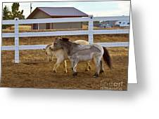 Nuzzeling Horses Greeting Card