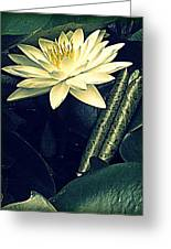 Nymphaea Greeting Card