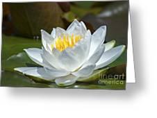 Nymphaeaceae.. Greeting Card