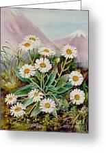 Nz Mountain Daisy Greeting Card
