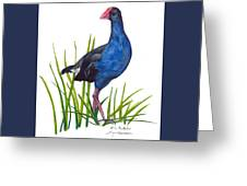 Nz Native Pukeko Bird Greeting Card
