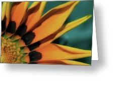 O Happy Day Greeting Card