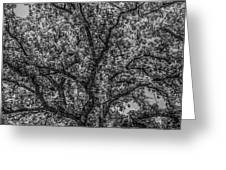 Oak Abstract Greeting Card