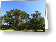 Oak Alley Plantation Panoramic Greeting Card