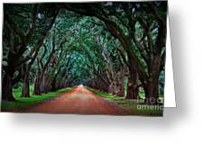 Oak Alley Road Greeting Card