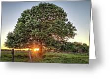 Oak At Sunset Greeting Card