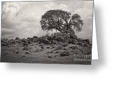 Oak In Rock Field Greeting Card