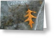 Oak Leaf In Ice  Greeting Card