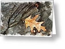 Oak Leaf On The Rocks Greeting Card