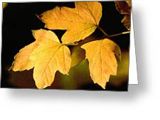 Oak Leaf Trio Greeting Card