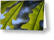 Oak Leaves Abstract Designed By Nature Greeting Card