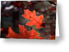 Oak Leaves Aglow Greeting Card